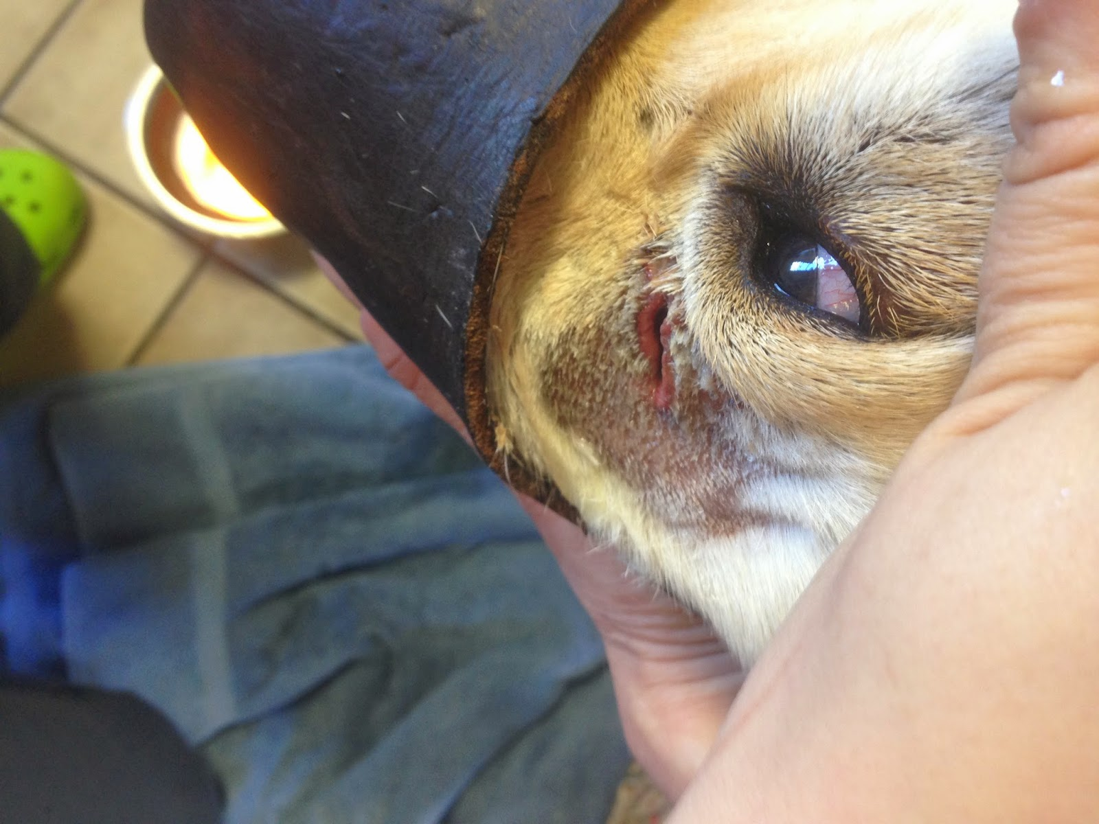Diary Of A Real Life Veterinarian Wound Repair Take Two