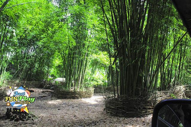 bambu lombok
