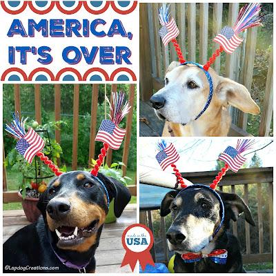 patriotic rescue dogs