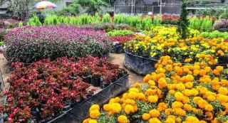 Villa dekat Taman bunga begonia lembang yang murah