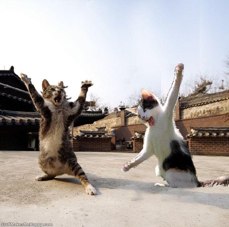 11. Master of Kung Fu
