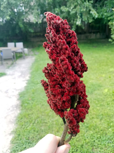 "Staghorn Sumac ""Berries"""