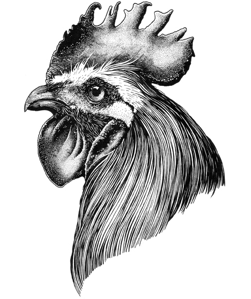 13-Rooster-Muthahari-Insani-Beautifully-Detailed-Ink-Drawings-and-Doodles-www-designstack-co