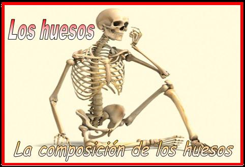La composición de los huesos [Anatomía y fisiología] ~ Optifutura