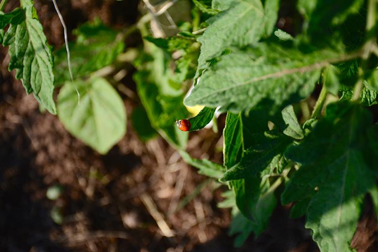 Gardening; critters | My Darling Days