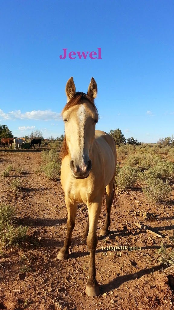 Equine WellBeing Rescue, Inc : January 2015