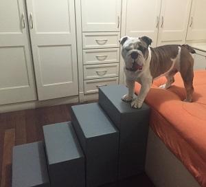 escadas para cães grandes