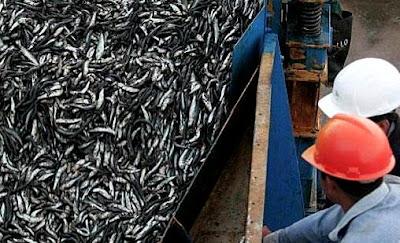 Foto de pesca de anchovetas