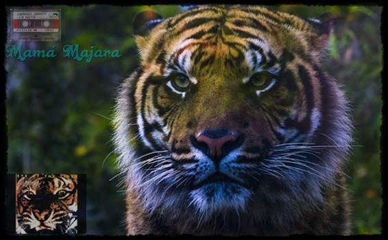 VDLN: La Mirada del Tigre