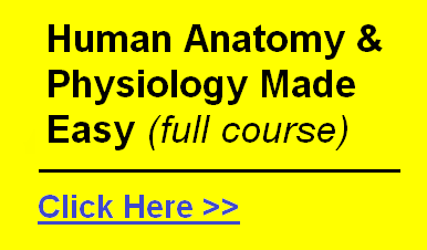 human anatomy course download