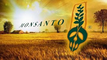 EPA na cama com a Monsanto / Bayer, ocultando estudos que mostram que o glifosato causa câncer