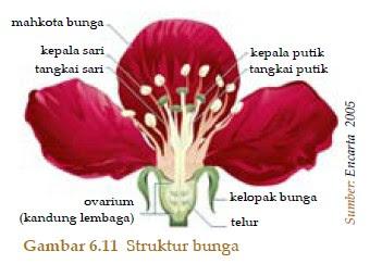 Organ pada Tumbuhan