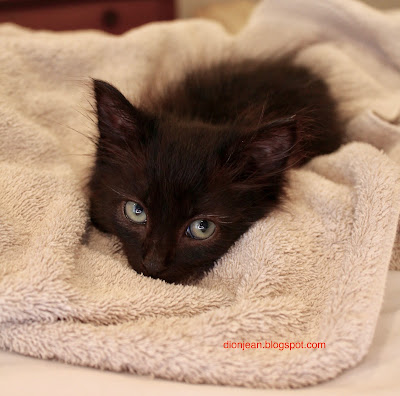 Baby kitty on her towel
