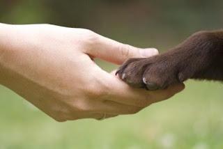 I tumori negli animali domestici: la diagnosi