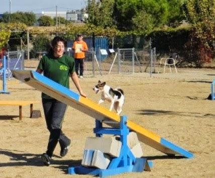 7/Junio. I Feria Canina. Guijuelo