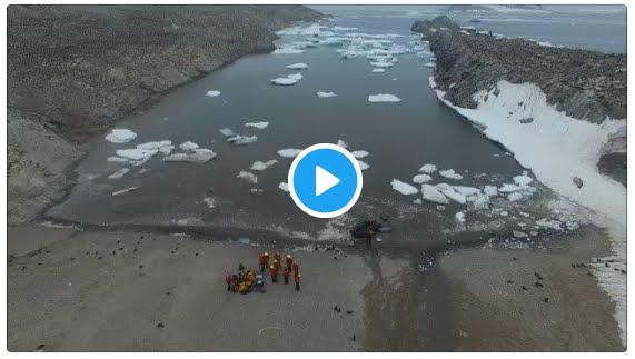 Incredibile Sorpresa in Antartide: pazzesca colonia di 1,5 milioni di Pinguini Adelia