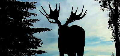 Silhouette of bull moose against morning sky