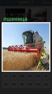 на поле собирают пшеницу комбайном