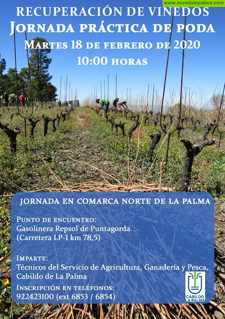 El Cabildo Insular organiza una nueva jornada de poda de viñedos