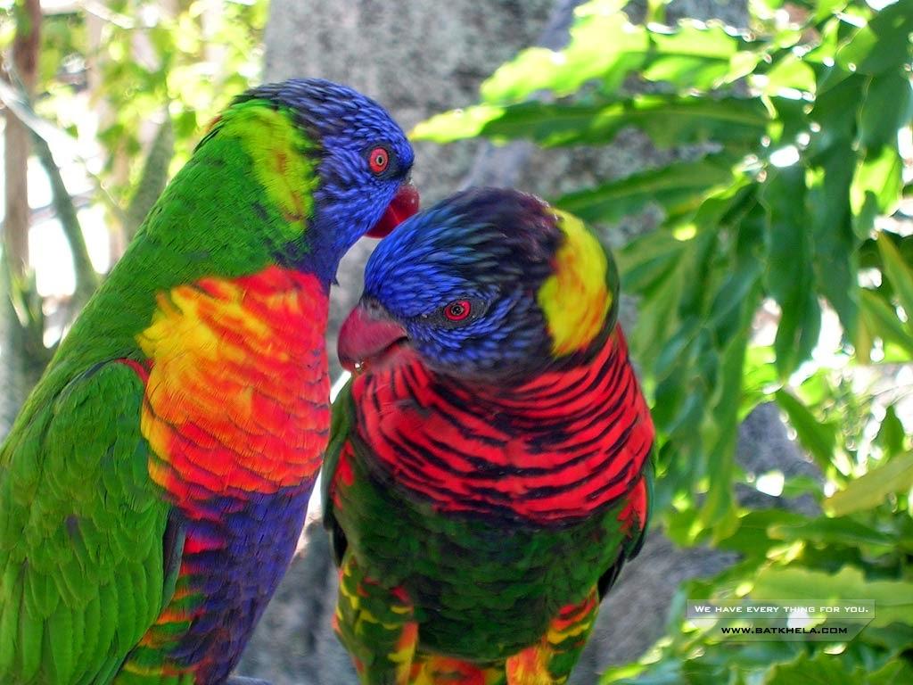 Aves Hermosas: AVES PRECIOSAS