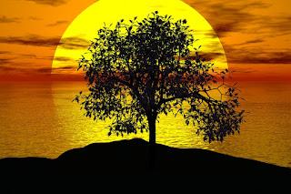 słoneczko, drzewo