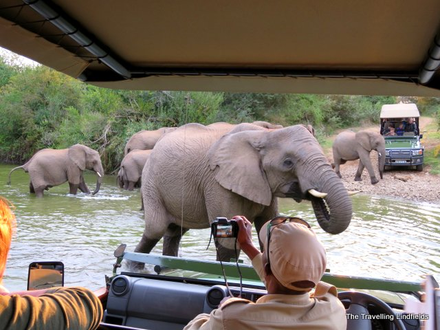 Elephants at Shamwari
