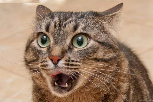 Pecinta Kucing Kenapa Kucing Sangat Populer Di Internet