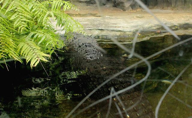 ハダカデバネズミや歩く植物??上野動物園で見逃せないなおすすめ動物8つ【n】 爬虫類館  イリエワニ