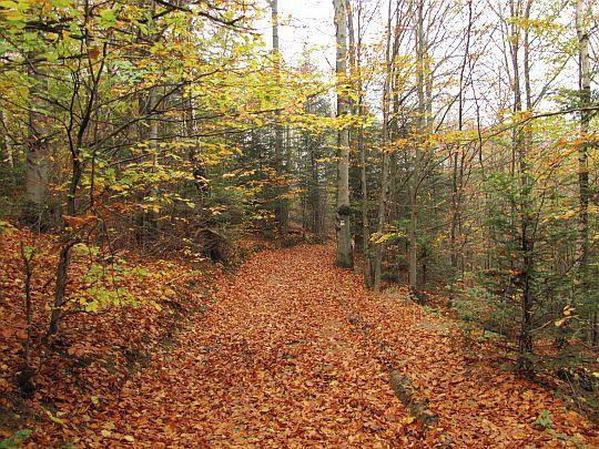 Schodzimy ze wzgórza Zaśpit po dywanie rudych liści.