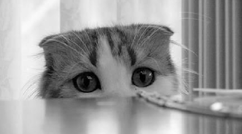 5 Tips to Approach a Shy Cat