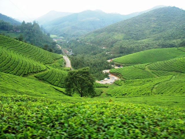 Picturesque tea estates - A View from the Photo Point  Munnar Hill Station Kerala Pick, Pack, Go