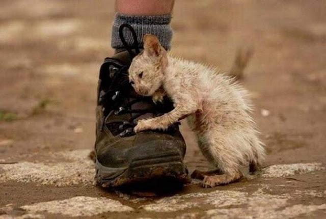 Armenia desarrolla ley integral contra el maltrato animal