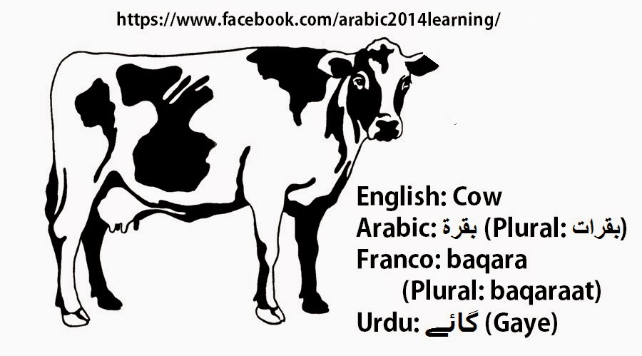 Learning Arabic Together: Animal