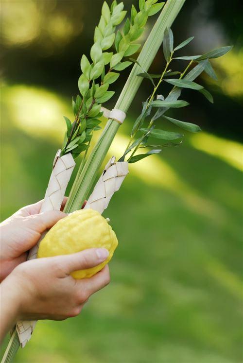Meaningful Sukkot Lulav Blessing