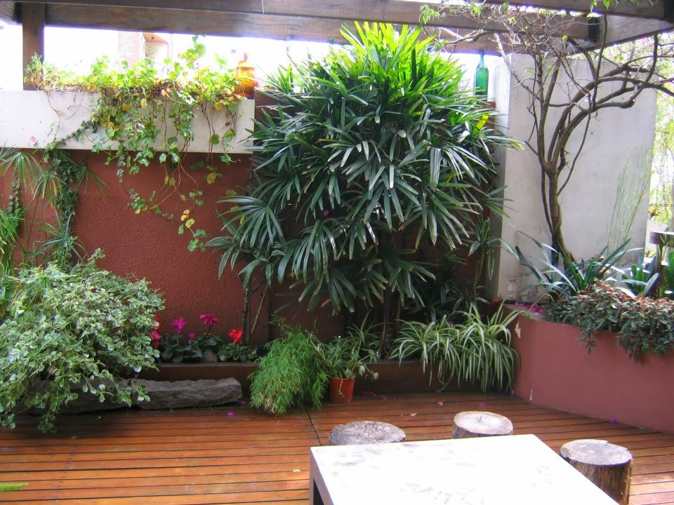 Patios peque os for Decoracion de patios pequenos con plantas