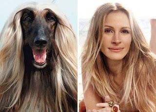 los dobles de los famosos - humor - julia roberts