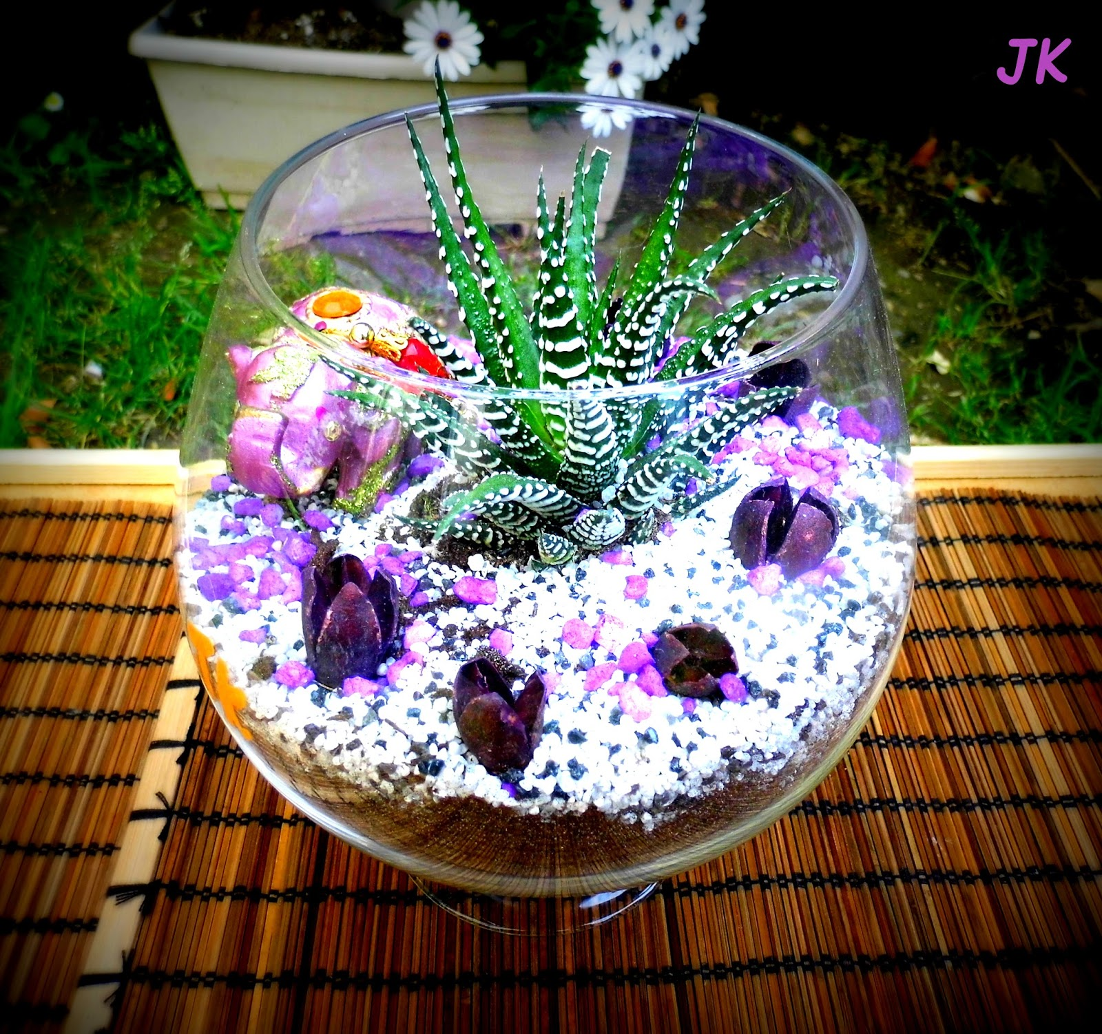 ju de kiwi terrarium sec les plantes succulentes. Black Bedroom Furniture Sets. Home Design Ideas