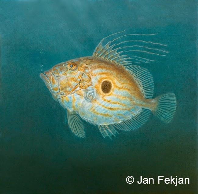 Bilde av digigrafiet 'St. Petersfisk'. Digitalt trykk laget på bakgrunn av et maleri av en fisk. Illustrasjon av St. Petersfisk, Zeus faber. Hovedmotivet er en gylden og blå fisk med en mørk flekk på siden, mot en bakgrunn av mørkt blått hav. Svake lysstråler kommer ovenfra. Bildet er nærmest kvadratisk.