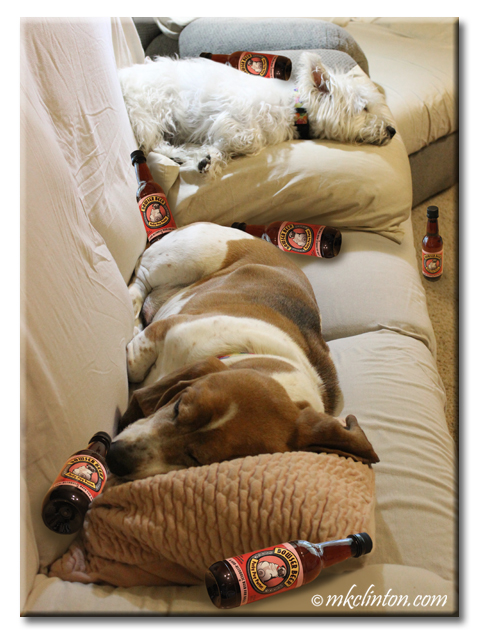 Humor photo of dogs with Bowser Beer