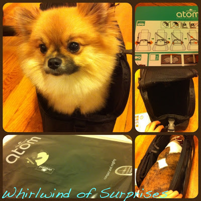 BabyPom and JR test out Sleepypod Atom pet carrier