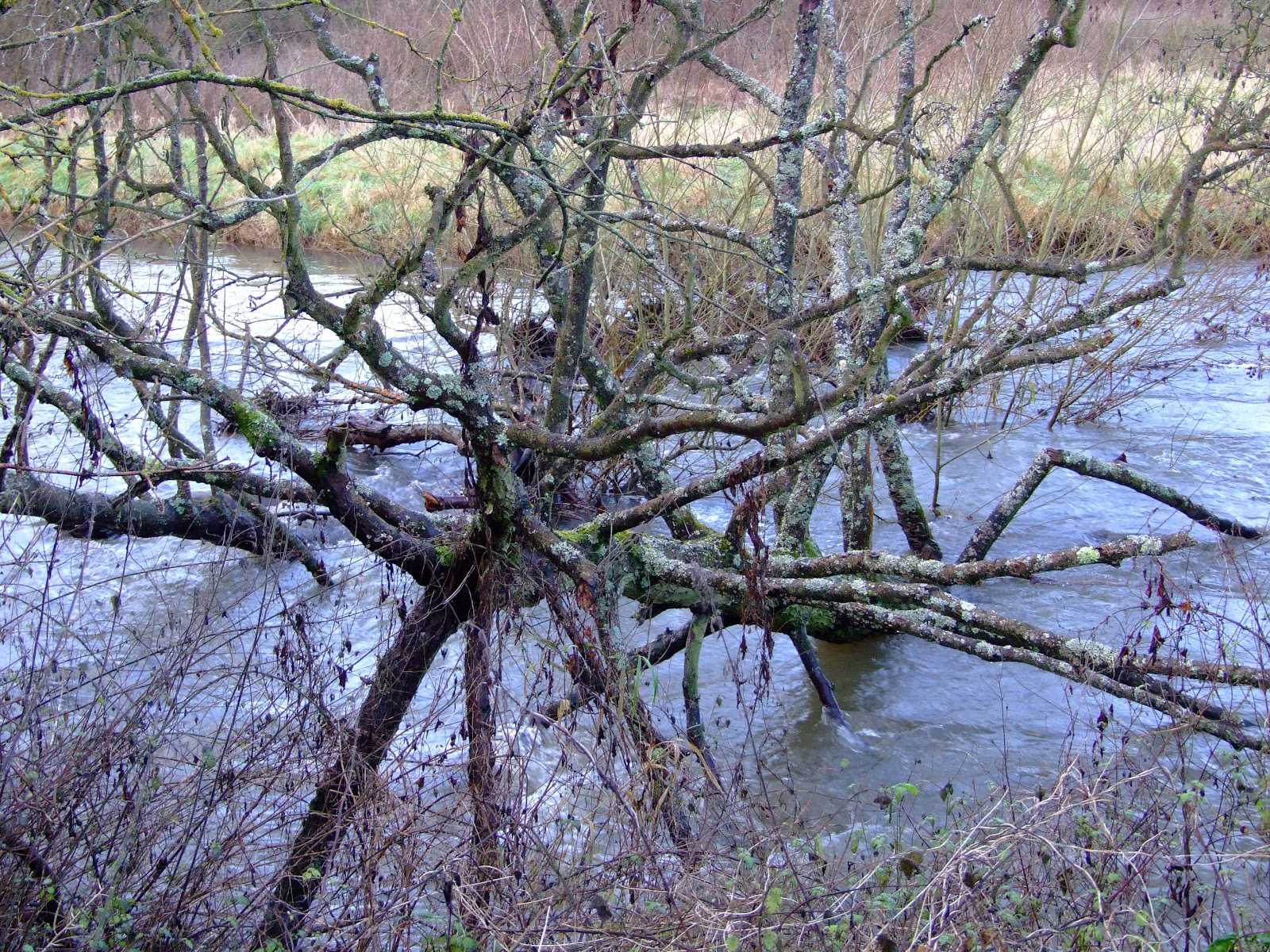 Canoeing and Kayaking on The River Kennet: Christmas ...