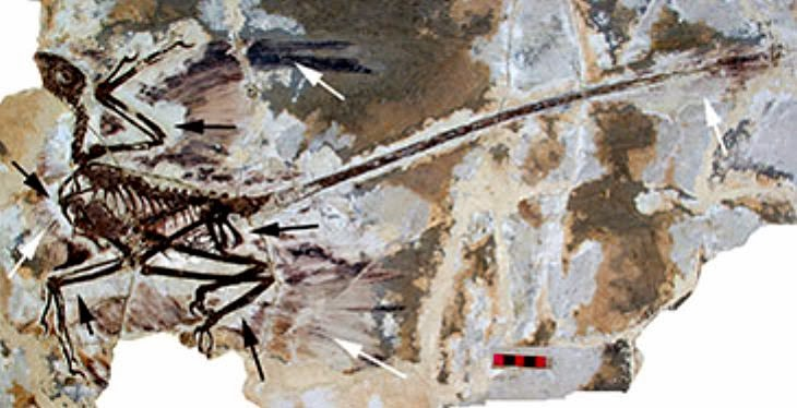 New insights into the origin of birds