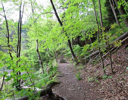 Ślady starej ścieżki spacerowej na drugim brzegu rzeki.