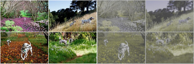 Photos adjusted to show nature through a dog's eyes vs. human vision
