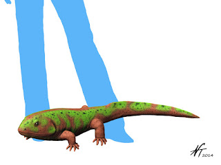 carboniferous amphibia