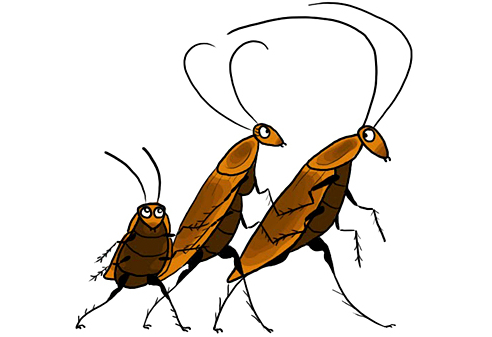 Natural Home Remedies For Roaches