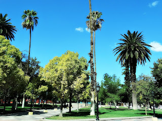 Palmeiras na Plaza Pedro del Castillo, Cidade de Mendoza