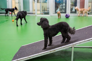 Things That You Should Do Before Sending Your Dog in Pet Boarding Facility