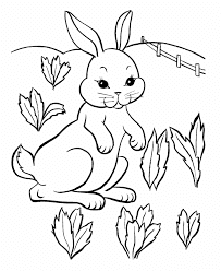 Bunny Rabbit Harvest Carrot Coloring Pages
