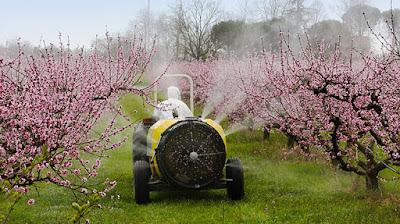 Pesticidi: nei cibi provenienti dall'Europa, non v'è alcuna traccia o quasi